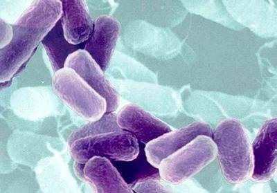 Alerta sobre bactéria E.coli